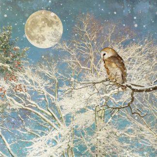 WC039 Night Owl bug art