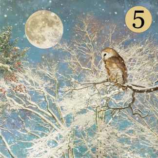 WCC039 Night Owl Five Pack