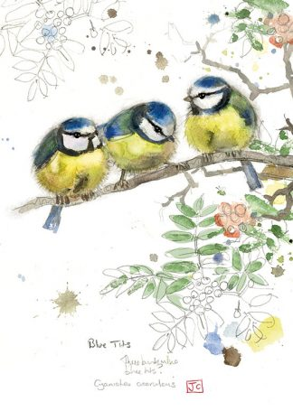 Bug Art F014 Blue Tits greetings card