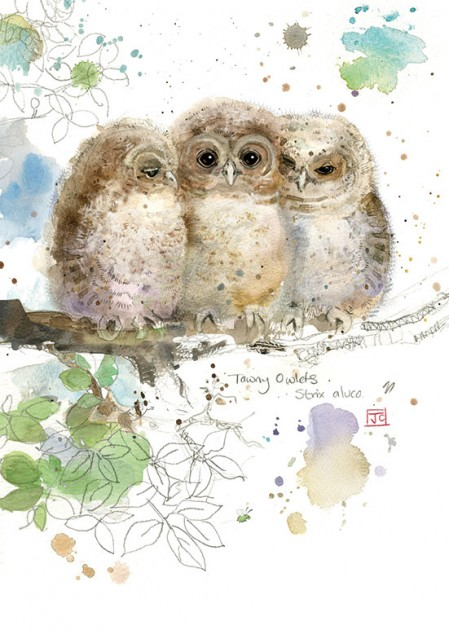 Bug Art F021 Three Owlets greetings card