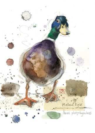 Bug Art F026 Mallard Duck greetings card